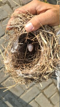 Bird's nest with one egg after falling from the tree