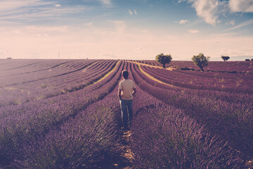Fototapeta One standing man look the lavender field around him - human and beautiful travel scenic nature outdoors - france provence valensole location - fragrance and parfums production business obraz