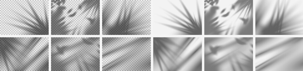 Template. Realistic set of tropical nature shadow overlays isolated on transparent and normal background for presentation. Transparent realistic shadow of tropical leaf. Vector illustration Eps10