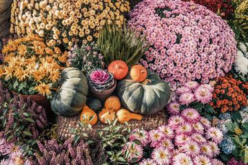 Pumpkins of different varieties among flowers, autumn harvest. Thanksgiving Day, Halloween concept