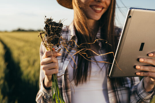woman farmer standing in wheat filed and examining wheat