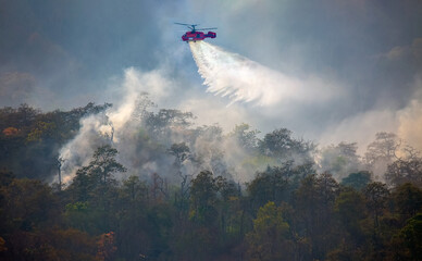 Obraz Fire fighting helicopter dropping water on forest fire - fototapety do salonu