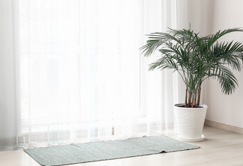 Fototapeta Light curtains with houseplant and rug in room obraz