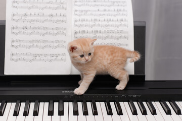 kitten with a piano
