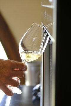 Professional white wine dispenser in a cellar held by a sommelier