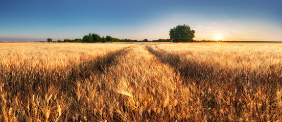 Fototapeta Wheat field panorama with path at summer sunset, Agriculture obraz