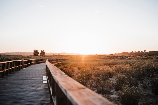 Boardwalk in nature during sunset