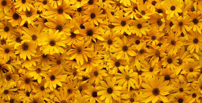 Wall of bright yellow flowers background.