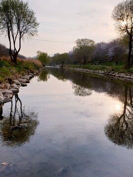 양재천 Gangnam river
