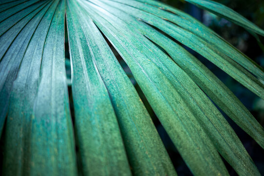 Green palm leaves closeup, abstract background with lush vegetation