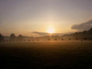 Obraz Sylwetki drzew stojące wzdłuż drogi na tle blasku wchodzącego jesiennego słońca w Parku Śląskim w Chorzowie - fototapety do salonu