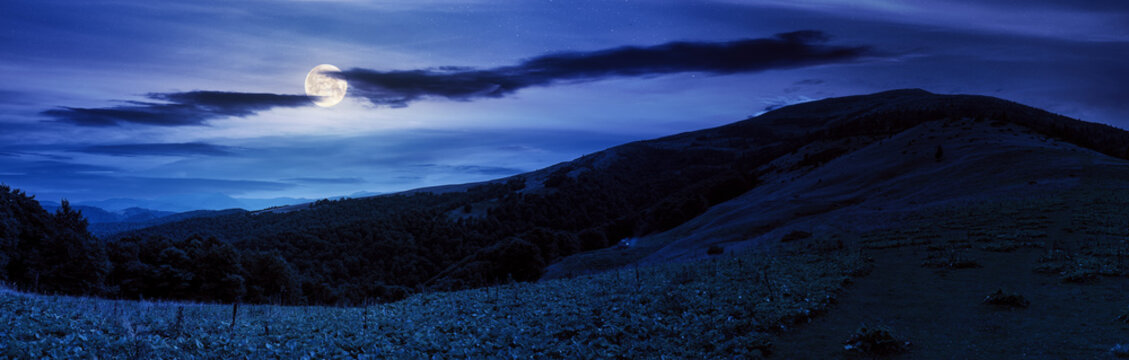 panoramic ukrainian countryside at night. meadows and hills under dark sky in full moon light. trees on the hill