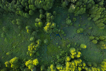 Fototapeta Wetlands in the summer forest. View from the drone. obraz