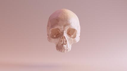 Obraz Flesh Coloured Human Female Skull Medical Anatomical Front 3d illustration render - fototapety do salonu