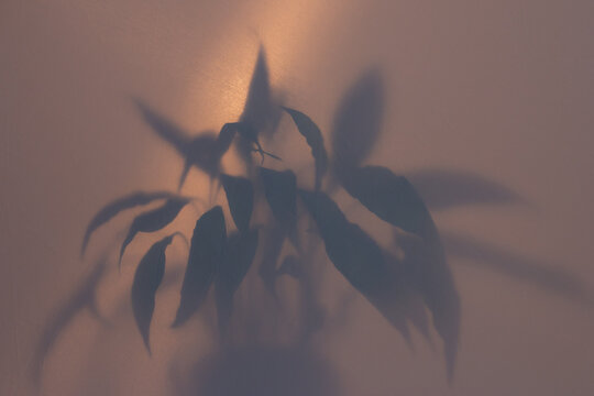 blurred picture with fog effect of palm leaves silhouettes behind frosted glass with backlight