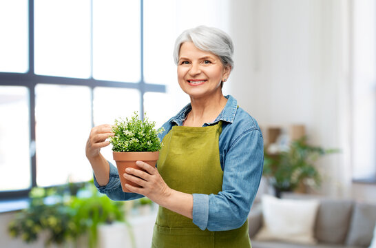 gardening and old people concept - portrait of smiling senior woman in green garden apron with flower in pot over home background