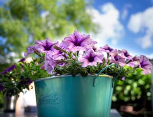 Obraz kwiat doniczkowy - fototapety do salonu