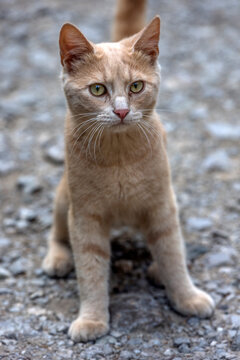 sad homeless red cat on the street