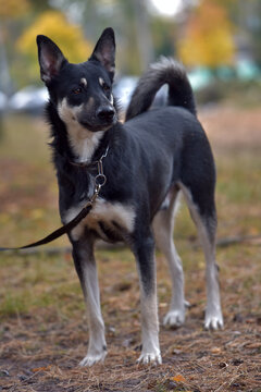 black and brown dog mongrel at animal shelter