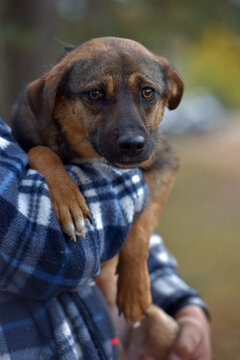 scared little brown mongrel puppy at animal shelter