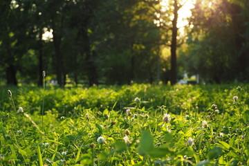Fototapeta Trawa na łące w ciepłych promieniach słonecznych obraz