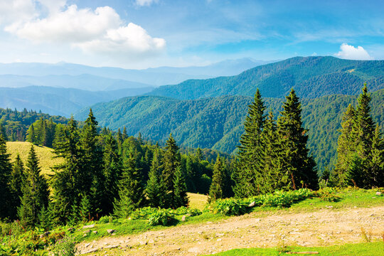 sunny summer landscape of carpathian mountains. forest and meadows on the hills rolling in to the distant valley. ridge beneath a sky with dynamic cloud formations