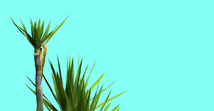 plants isolated on turquoise background