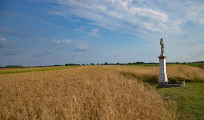 Fototapeta field and sky in Dziewkowice  obraz