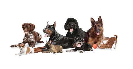 Obraz Art collage made of funny dogs different breeds posing isolated over white studio background. - fototapety do salonu