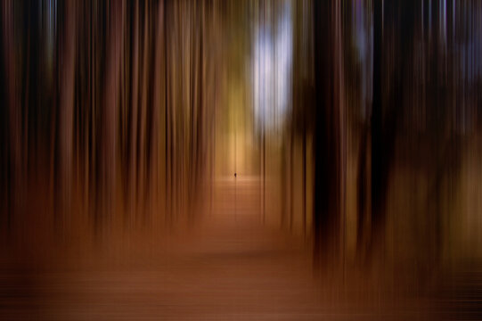 A lonely walker, crossing the forest of the Cañon del Rio Lobos, among the trees, in Soria, Spain