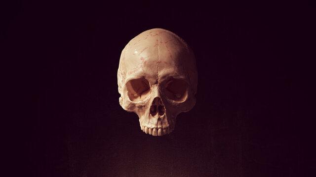 Human Female Skull Pirate Poison Horror Symbol Halloween Woman Medical 3d illustration render