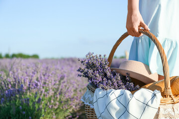Fototapeta Beautiful young woman with picnic basket in lavender field obraz