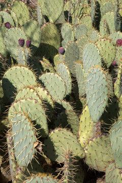 Closeup of Cactus; Dehesa de la Villa Park; Madrid