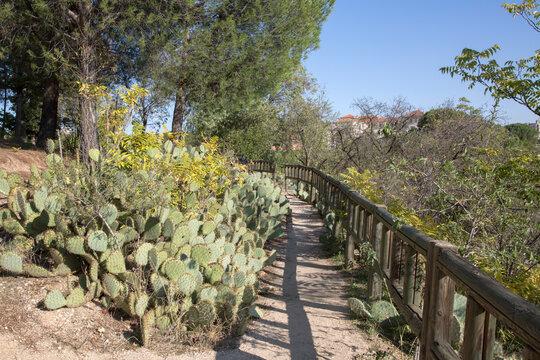 Wild Cactus and Path in Dehesa de la Villa Park; Madrid