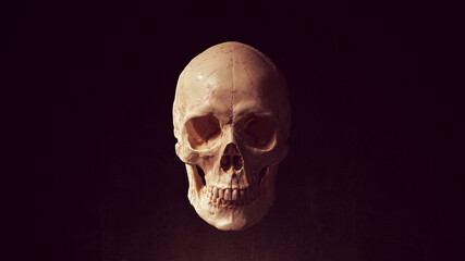 Obraz Human Female Skull and Jaw Bone Pirate Poison Horror Symbol Halloween Woman Medical 3d illustration render  - fototapety do salonu