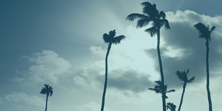 Silhouettes of palm trees are under cloudy sky