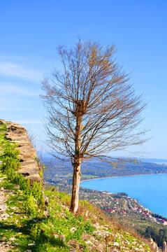 A lonely tree on a precipice. Iverian Mountain, Abkhazia