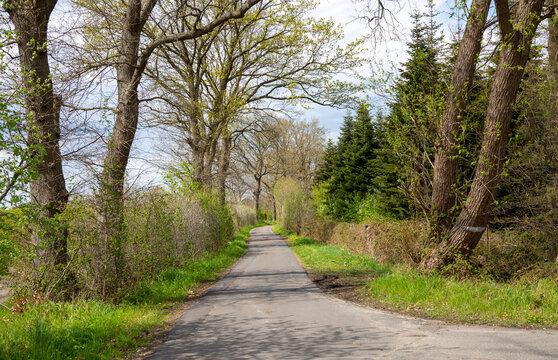 Asphaltierter Waldweg mit Bäumen