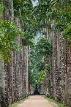 Jardim Botânico do Rio de Janeiro, um dos pontos turísticos obrigatórios da capital do estado, com muita beleza e locais aprazíveis. Brasil