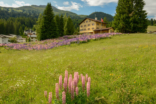 Flower garden in front of a house at Valbella on Switzerland