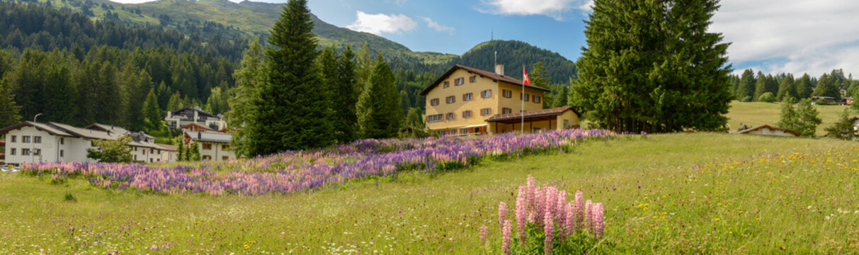 Flower garden in front of a house at Valbella on the Swiss alps