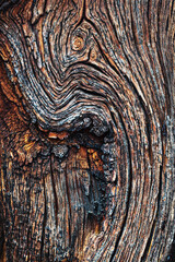 texture of an old tree, background