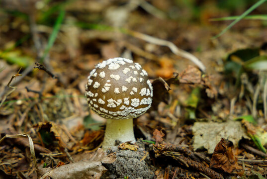 Wild mushrooms in a forest. Wild mushrooms in a forest during the summer season.