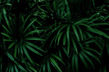 Full Frame of Palm Leaves Texture Background. tropical leaf