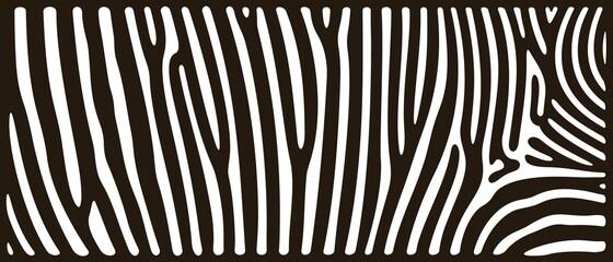 Zebra texture logo. Isolated zebra texture on white background