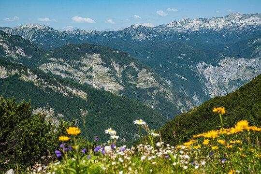 Slowenien Naturschutzgebiet Wandern Blumen Berge Sommer 2021