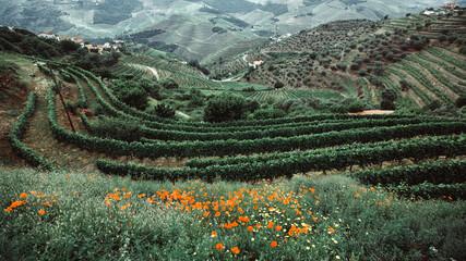 Fototapeta View of the hills in Douro Valley, Portugal. obraz