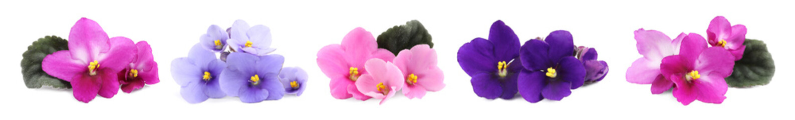 Obraz Set with beautiful violet flowers on white background. Banner design - fototapety do salonu