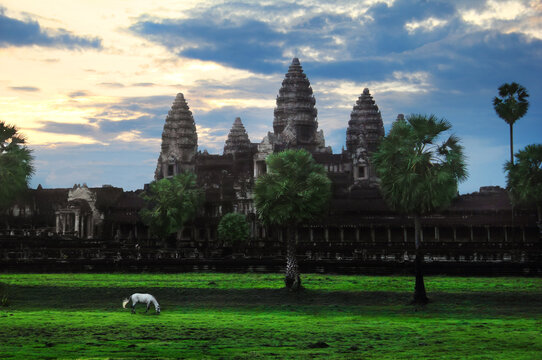 Scenic view of Angkor Wat, palms, green field and white hourse at sunrise, Cambodia, Asia