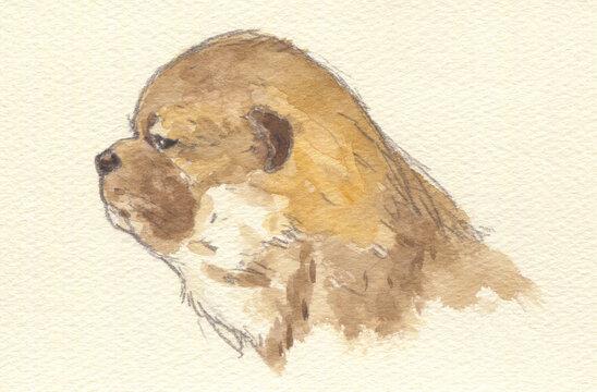 柴犬 子犬 水彩画